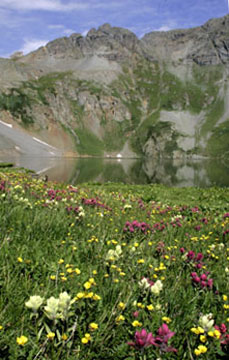 clear lake near silverton colorado wildflowers photo