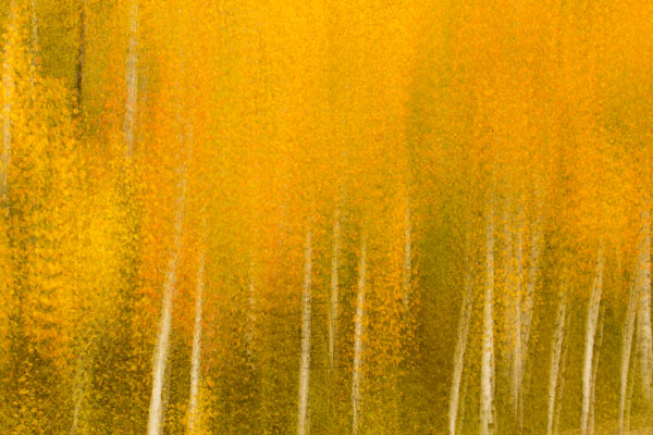 canon 5d miii multiple exposure fall color abstract