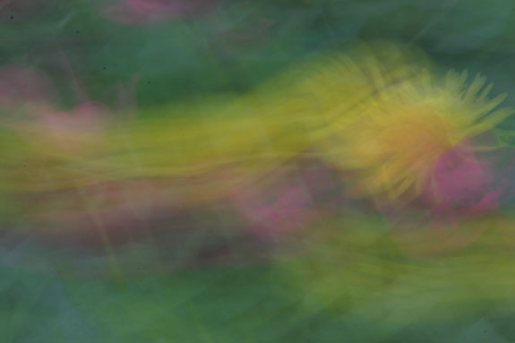 flower swoosh abstract