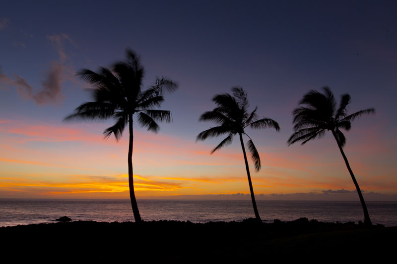 hawaii sunset and palm trees