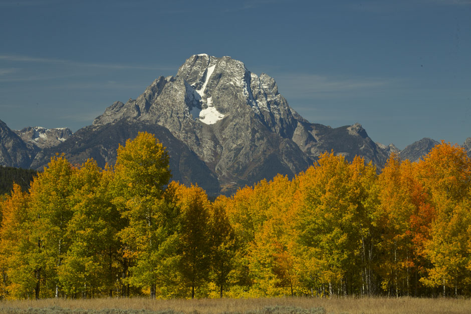 mount moran and fall color
