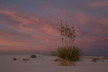 white sands new mexico soapstone yucca sunet photograph