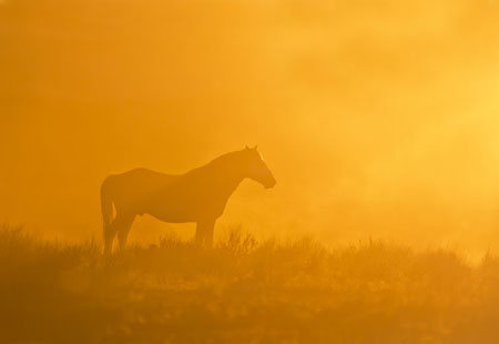 wild horse silhouette in the dust at sunset - sand wash basin