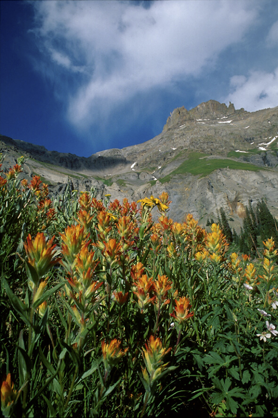 paintbrush and mt. petosi yankee boy basin colorado photo